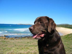 Cedie beach